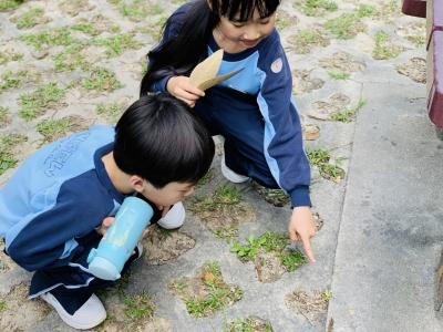 二年級常識科遊郊野公園活動